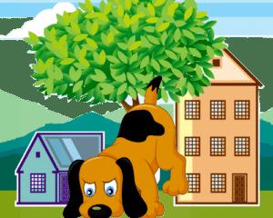 déménager avec son chien